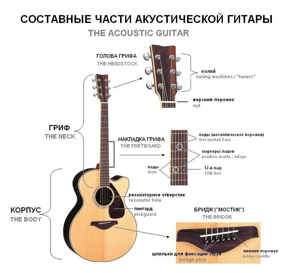 носят схема строения гитары людьми